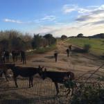 Paardrijden (dit zijn ezeltjes;)